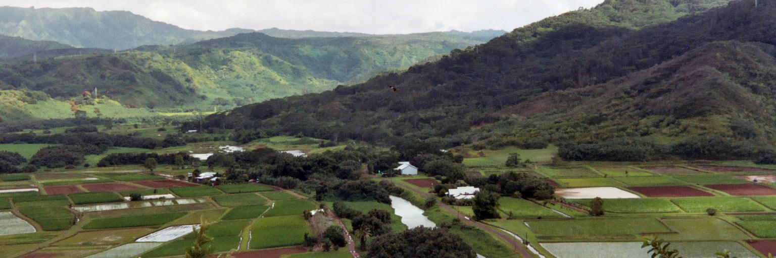 Rice_Fields_Kauai_2003___004_1A